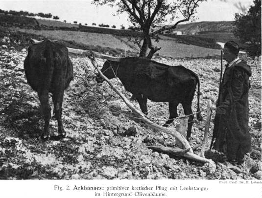 primitive plough